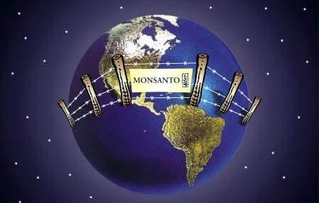 Monsanto o cómo matar a los españoles. Todo lo que el Gobierno no quiere que sepas.